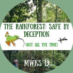 The Rainforest : Safe by Deception (Not All the Time)