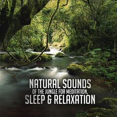 Natural Sounds of the Jungle for Meditation, Sleep & Relaxation