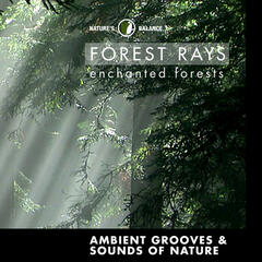 Forest Rays: Ambient Grooves & Sounds Of Nature