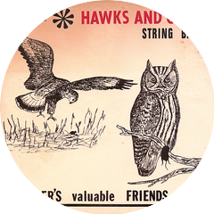 Hawks And Owls String Band