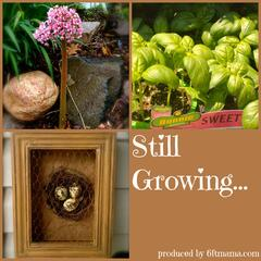 Still Growing… a weekly gardening podcast with Jennifer Ebeling