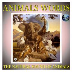 The Natural Sound Of Animals