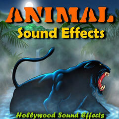 Animal Sound Effects