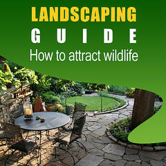 Landscaping Guide - How to Attract Wildlife and Maintain Your Yard Like a Professional
