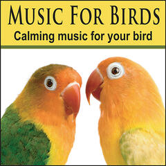 Music For Birds: Cockatoo Music, Bird Music, Parrot Music