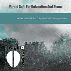 Forest Rain for Relaxation and Sleep