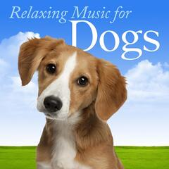 Relaxing Music for Dogs: Most Popular Songs for Calming Down Your Dog, Puppy or Pet