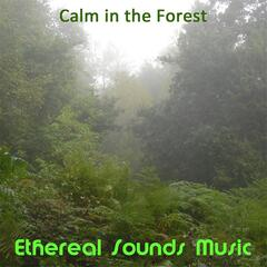 Calm in the Forest