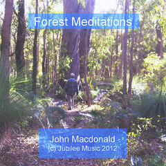 Forest Meditations