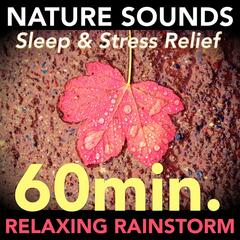 Nature Sounds - Relaxing 60 Minute Rainstorm for Sleep and Stress Relief