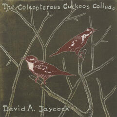 The Coleopterous Cuckoos Collude