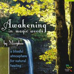 Awakening in Magic Woods