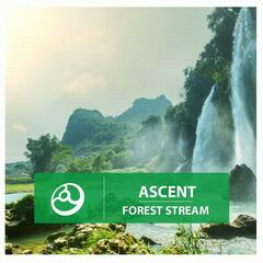 Forest Stream - Single