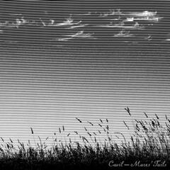 Mares' Tails (Loudness War Edition)