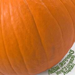 World's Largest Pumpkin