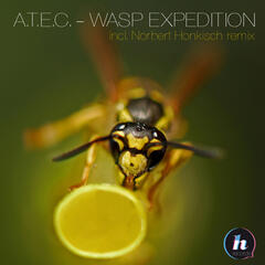 Wasp Expedition