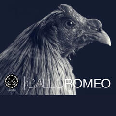 Gallo Romeo