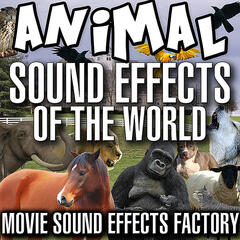 Animal Sound Effects of the World
