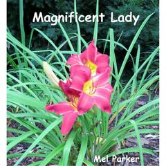 Magnificent Lady