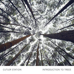 Introduction to Trees