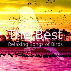 The Best Relaxing Songs of Birds – Morning Birds in the Forest, Deep Relaxation, Beautiful Singing Birds, Total Relax & Rest