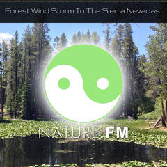 Forest Windstorm in the Sierra Nevadas (Nature Sounds for Meditation, Relaxation, Yoga, Baby Sleep, Spa, Chakra Balancing, Sound Therapy, Studying, Healing Massage, Insomnia and Deep Sleep)