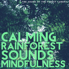 Calming Rainforest Sounds for Mindfulness (The Sound of the Forest Canopy)