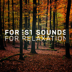 Forest Sounds for Relaxation
