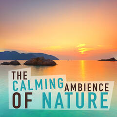 The Calming Ambience of Nature