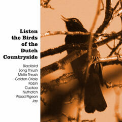 Listen the Birds of the Dutch Countryside