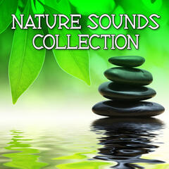 Nature Sounds Collection (Relax, Healing, Spa, Meditation)