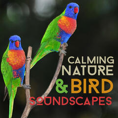 Calming Nature & Bird Soundscapes