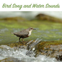 Bird Song and Water Sounds