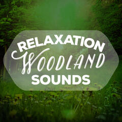 Relaxation Woodland Sounds