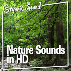 Nature Sounds in Hd