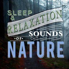 Sleep and Relaxation Sounds of Nature