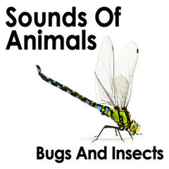 Sounds of Animals: Bugs and Insects