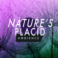 Nature's Placid Ambience