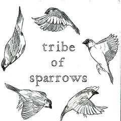 Tribe of Sparrows