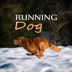 Running Dog – Free Animals, Soothing Nature Sounds for Puppies & Cats, Calm Down Your Animal Companion