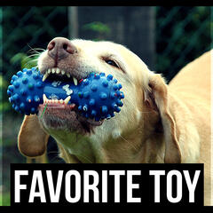 Favorite Toy – Stress Relief for Pets, Dog's Relax, Calm Down Your Animal Companion, Music Therapy for Dogs, Sleep Aids, Pet Relaxation