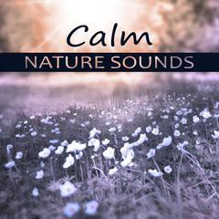 Calm Nature Sounds – Deep Sounds for Relax, Hypnotic Therapy, Cure Insomnia, Water Sounds