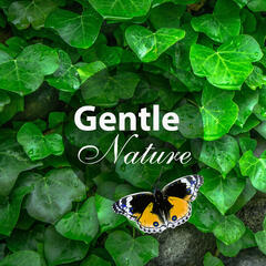 Gentle Nature – Relaxation with Nature Sounds, Calming Music, Soothing Sounds of Nature, Time for Yourself