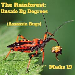 The Rainforest : Unsafe by Degrees (Assassin Bugs)