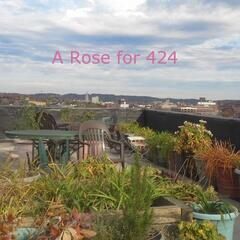 A Rose for 424