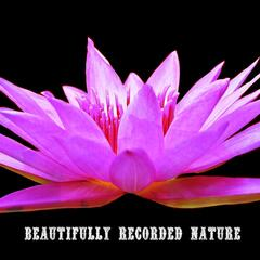 Beautifully Recorded Nature