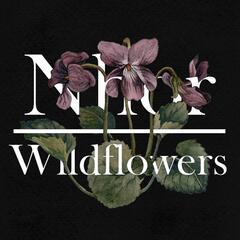 Wildflowers: Winter