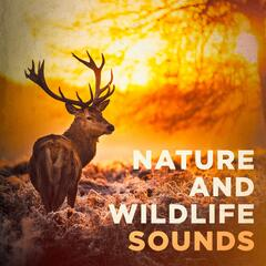 Nature and Wildlife Sounds