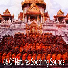 66 Of Natures Soothing Sounds