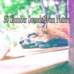 50 Slumber Sounds From Nature